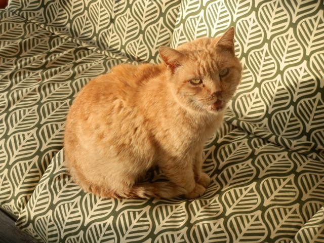 My old yellow cat a little over a week after his presumed demise