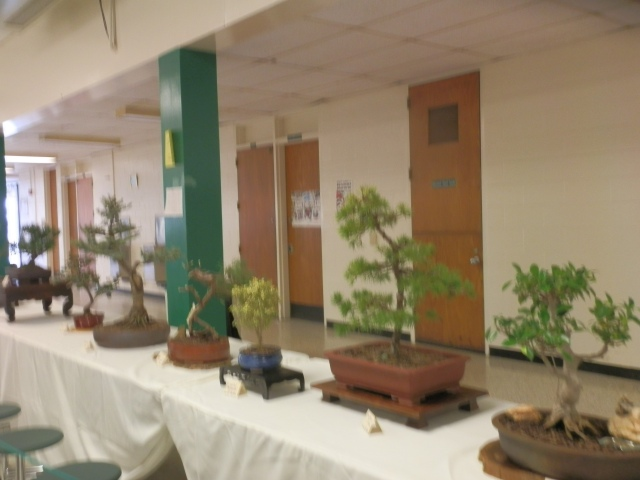 A collection of bonsai specimens by our local bonsai artists in the Albemarle Bonsai Society