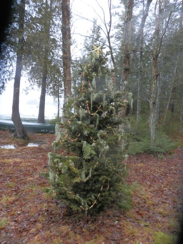 Our 2015 Balsam Fir Wilderness Christmas Tree