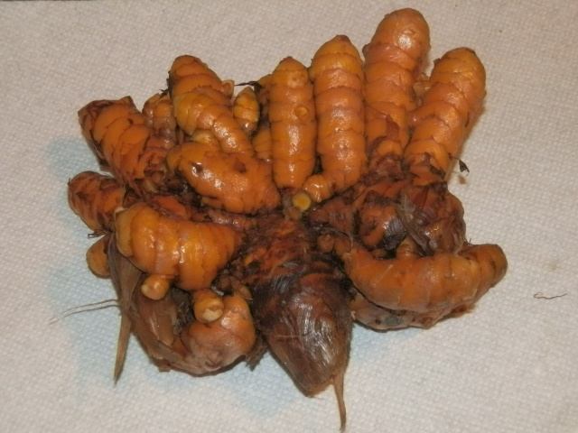 Healthy turmeric ready for eating or division
